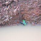 Unidentified Australian Frog by 4spotmore