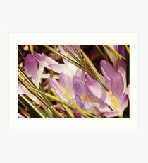 Spring Sites Art Print