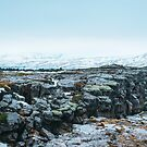 Winter in the Thingvellir by Pascal Deckarm