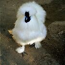 Fluffy Fowl by mariarty