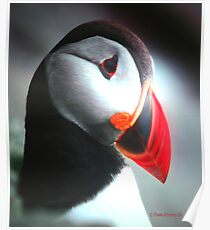 A Puffin Portrait Poster