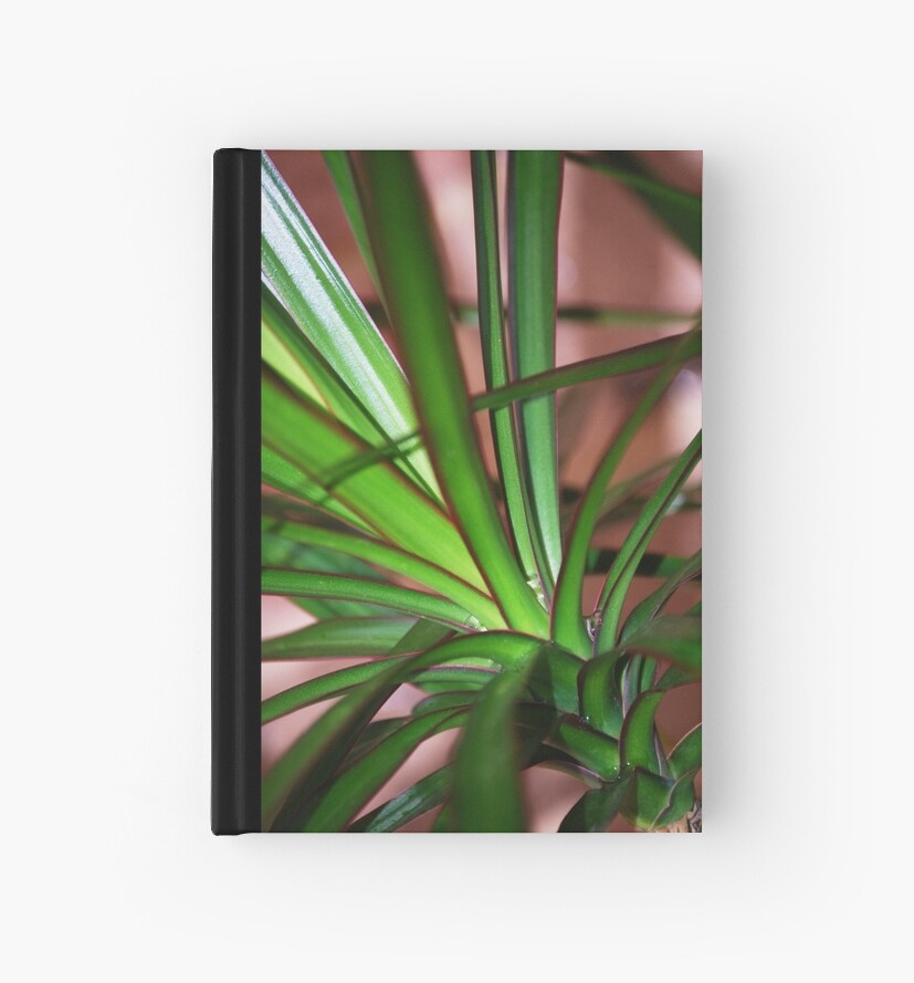 Plant by Bek  Williams