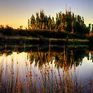 Sunlight on the grass at Macquarie River by Elana Bailey