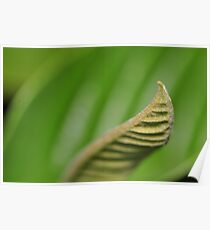 Tip of the Week - A sprouting leaf Poster