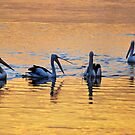 Pelican Sunset conference by bazcelt