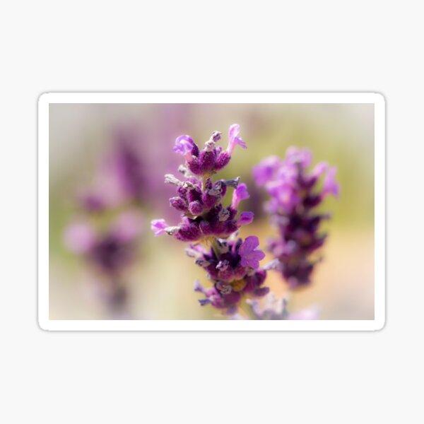English Lavender Sticker