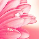 Petals In Pink by Tanya C  Smith
