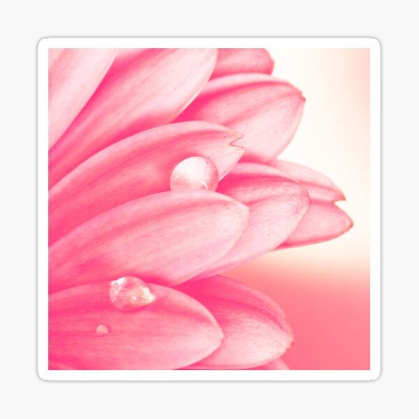 Petals In Pink Sticker