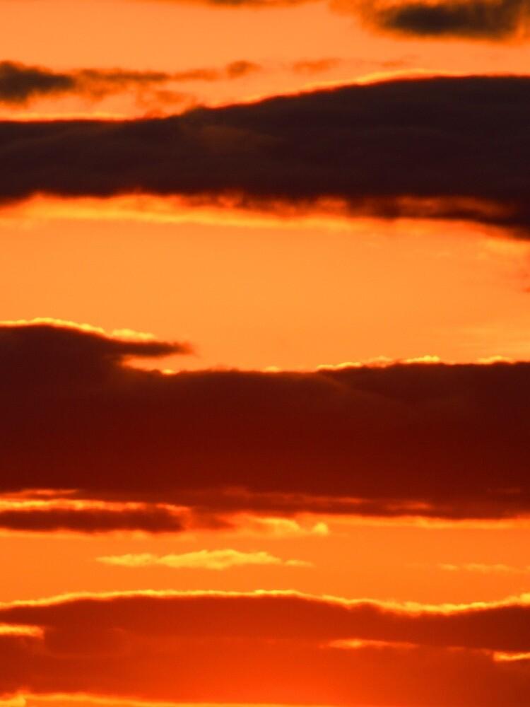Orange And Black by wselander
