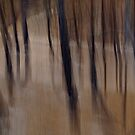 Dancing Trees by Bojoura Stolz