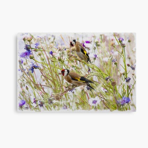 Goldfinches Feeding Canvas Print