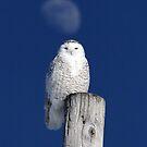 Moon Post Alignment / Snowy Owl by Gary Fairhead