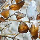 Ice Storm by Laurie Minor