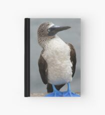 Blue Footed Booby Hardcover Journal