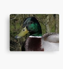 Duck bill Canvas Print