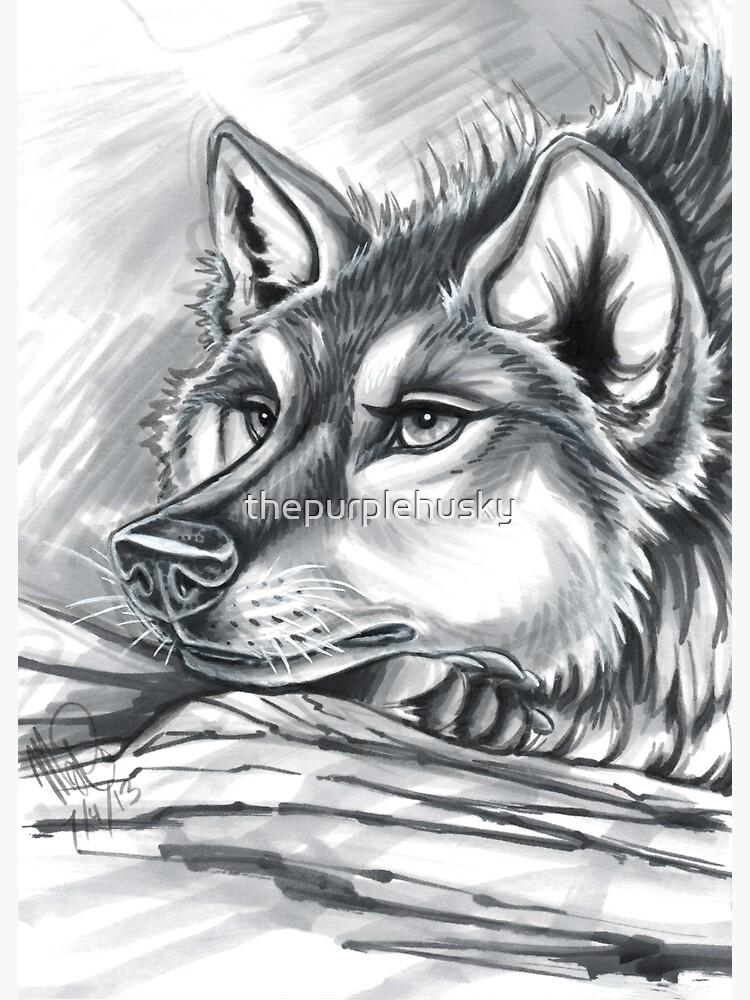 Wolf Grey by thepurplehusky