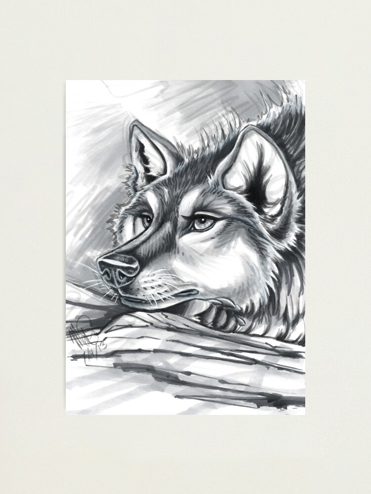 Alternate view of Wolf Grey Photographic Print