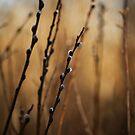 Spring by Cadence Gamache