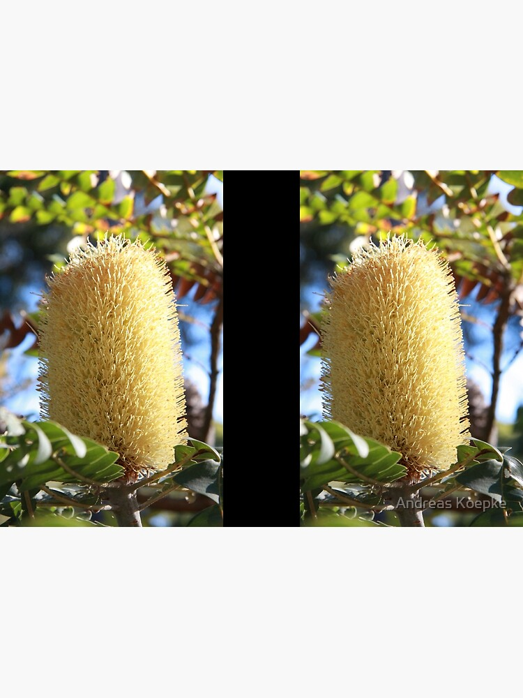Banksia Flower by mistered