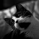 The cat by iaintsmart