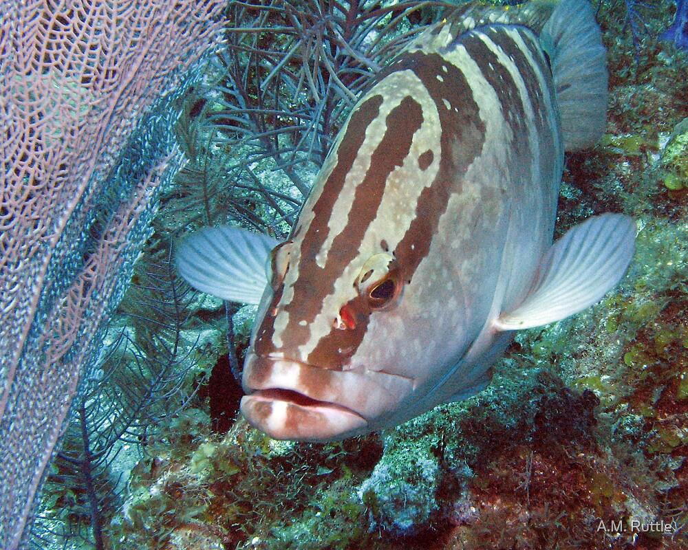 Nassau Grouper & Sea Fan by A.M. Ruttle