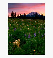 Alpine Garden Photographic Print