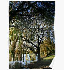 Autumn Willow Poster