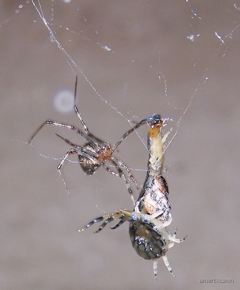 Ultimate Fighting Championship Centipede vs Orb Weaver by amercnwmn