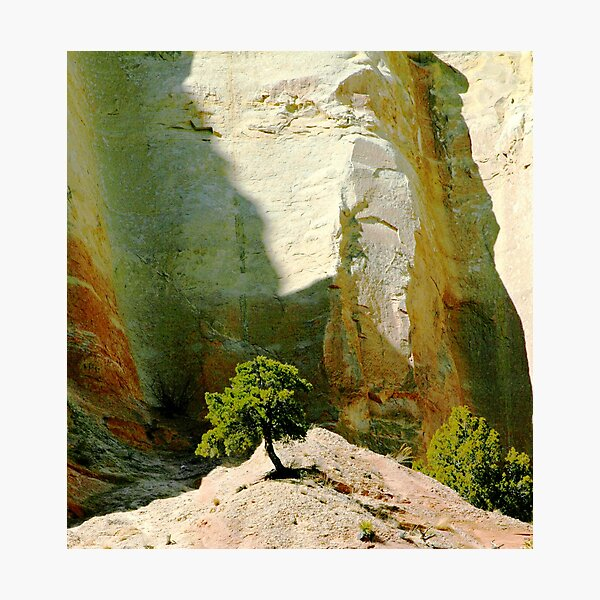 tree in the light of wonderful photo by CheyAnne Sexton Photographic Print