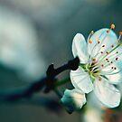 Spring by Christy Tidwell