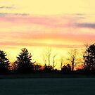 Daylight by royce