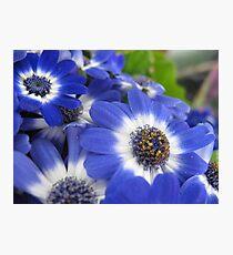 Vaudeville Blue Spectacle Photographic Print