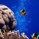 Nemos Adventures In The Red Sea by hurmerinta