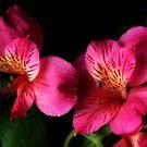 Spring flowers with showers by Jeffrey  Sinnock