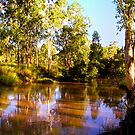 River Gums by marinar