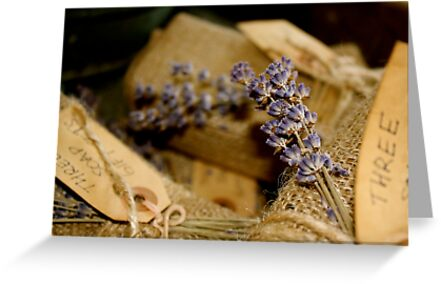 Lavender by Dimple Dhabalia