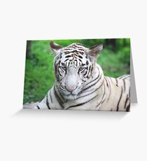 The Royal Look of a White Tiger Greeting Card