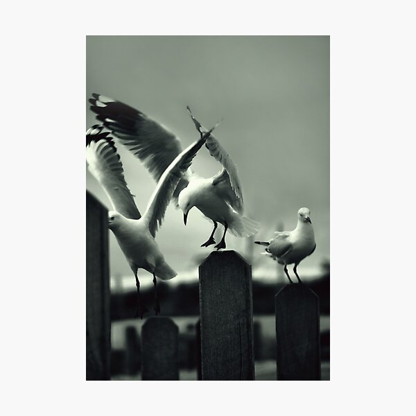 Poetry in Motion Photographic Print