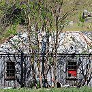 Bush Shack - Bylong NSW Australia by Bev Woodman