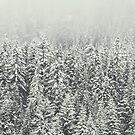 «Bosque nevado» de La Chic