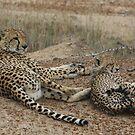Cheetah Family by Zeanana