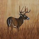 Grasslands  by Scott  Nordstrom