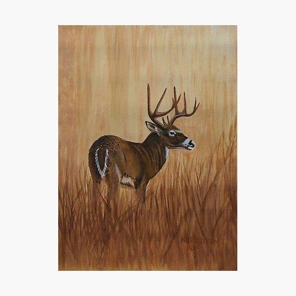 Grasslands  Photographic Print