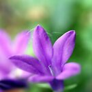 A Small Lovely Blue Bell by hurmerinta