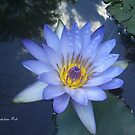 Water Lily by Edyta Magdalena Pelc