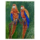 Pair of Parrots  by Scott  Nordstrom