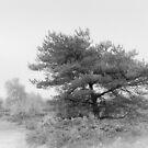Misty Tree by Tanya C  Smith