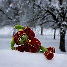 Frosch -  Winter von laura-S