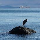 Heron At Sea by Betsy  Seeton