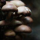 Mushrooms by nefetiti